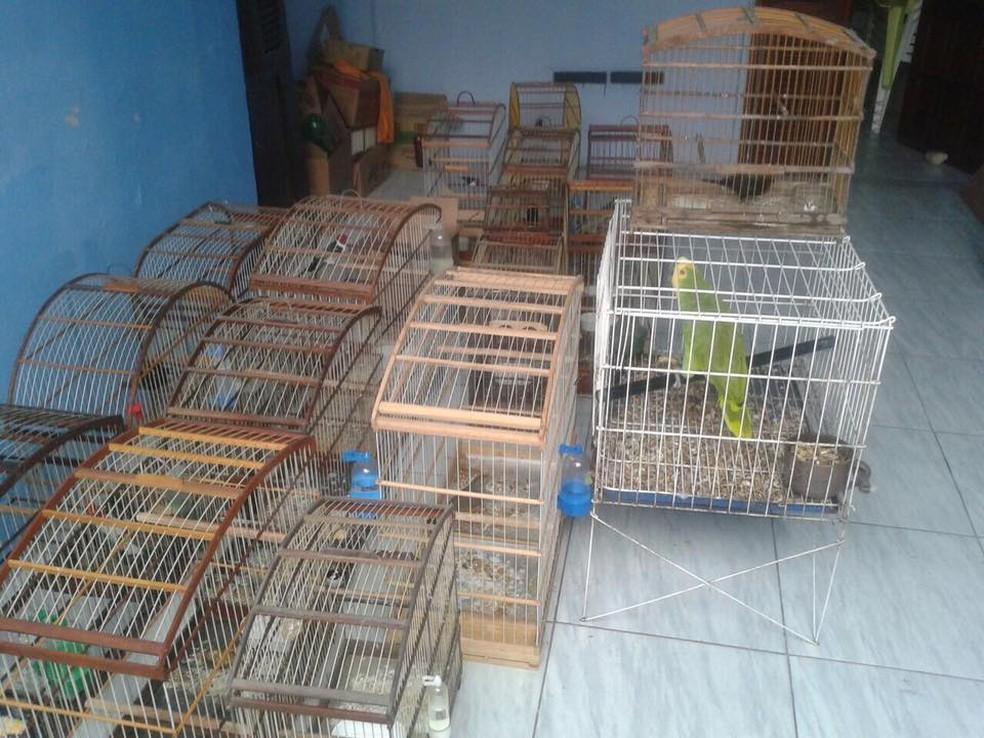 Animais foram encontrados dentro de gaiolas e com maus-tratos em Fortaleza (Foto: BPMA/Divulgação)