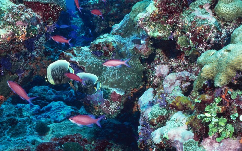 Aquecimento dos oceanos pode impactar a vida marinha — Foto: j981511225/Creative Commons