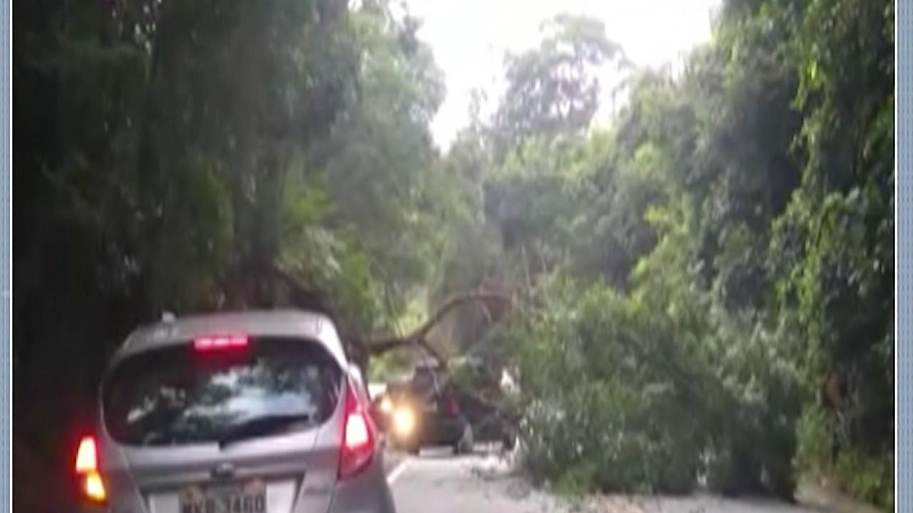 Árvore cai no meio da rodovia Mogi-Guararema e afeta o tráfego na região