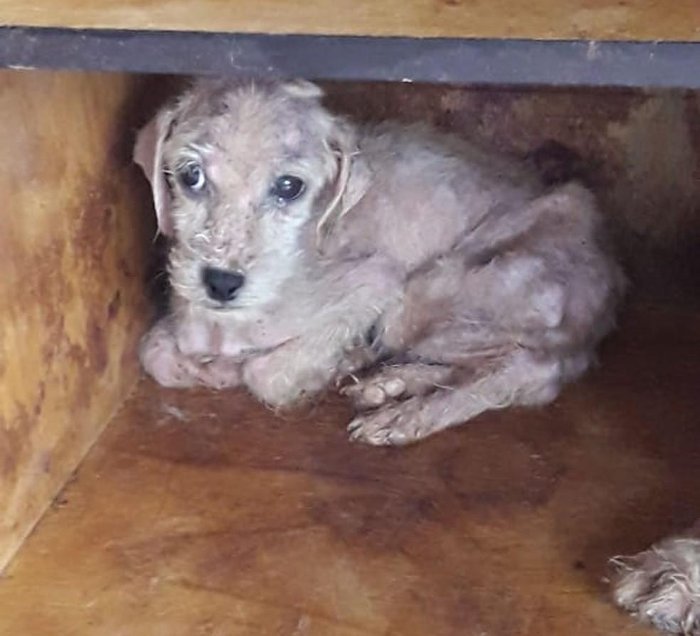 Os cachorros foram levados em um veterinário da cidade de Canenéia, SP, e, depois, registrados em uma ONG — Foto: Divulgação/Polícia Militar Ambiental