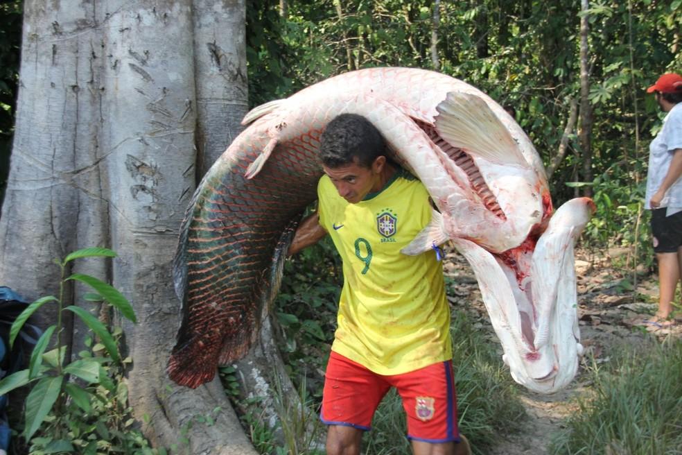 Pirarucu pode alimentar até quatro famílias, afirma biólogo — Foto: Arquivo pessoal