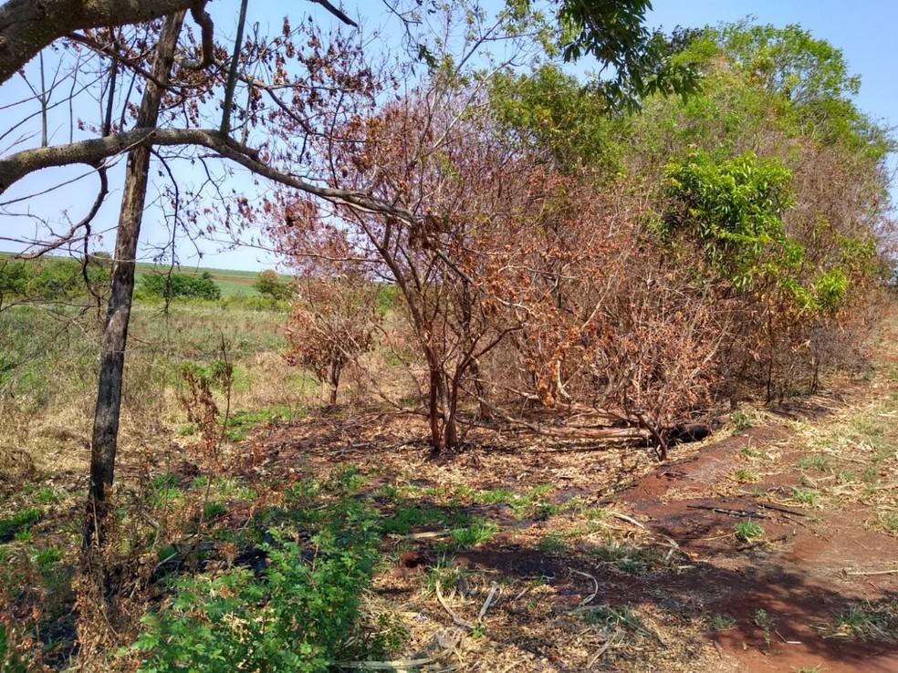 Em São Pedro do Turvo, proprietário foi autuado em R$ 17 mil por uso de fogo em área agropastoril — Foto: Polícia Ambiental/Divulgação