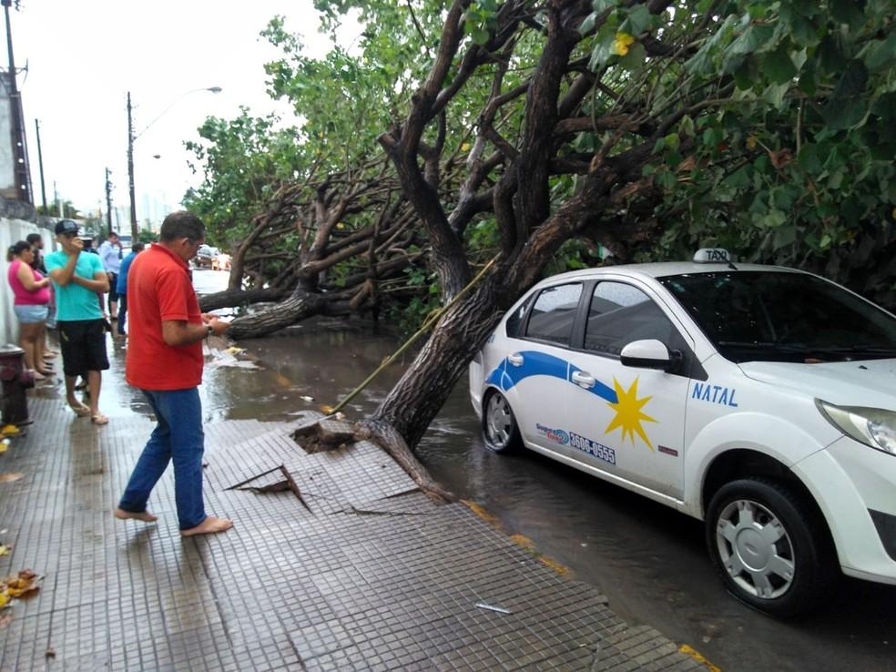 Árvores caíram sobre um táxi na Rua dos Canindés, Alecrim, Natal (Foto: Alice Rufino/Cedida)