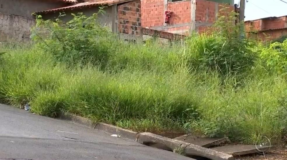 Moradores reclamam de animais peçonhentos nas casas devido aos terrenos com mato alto e lixo (Foto: Reprodução/TV TEM)