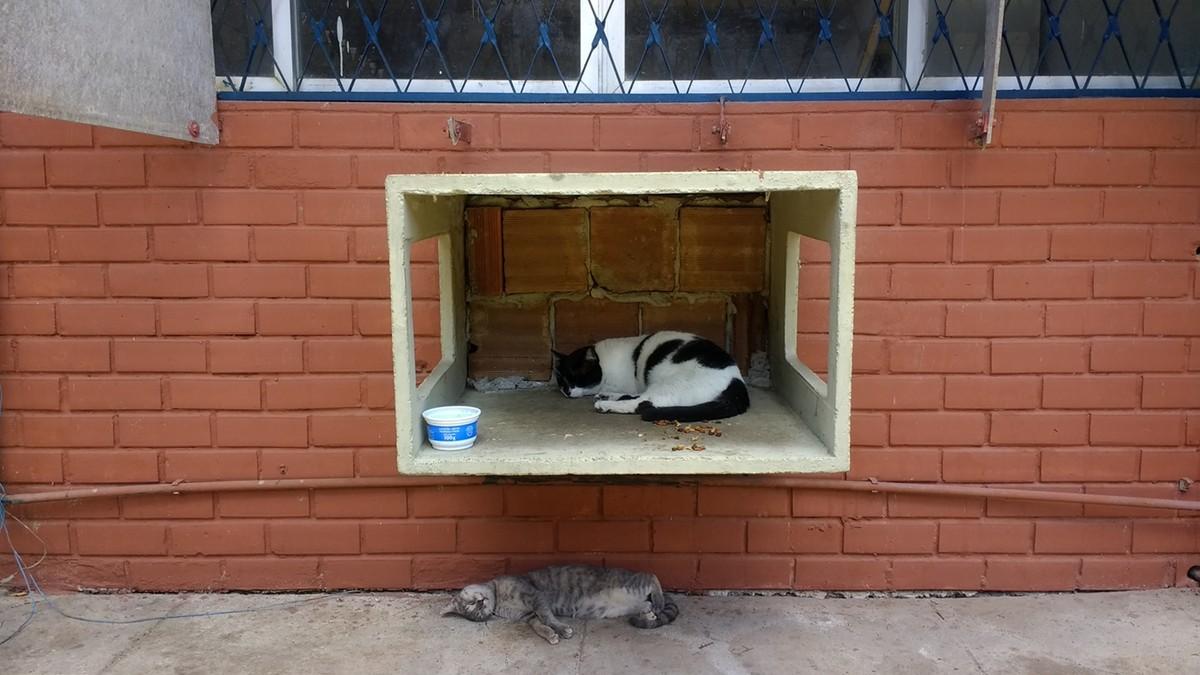 Pelo menos 60 gatos morreram envenenados na UFPB em 8 meses, diz comissão
