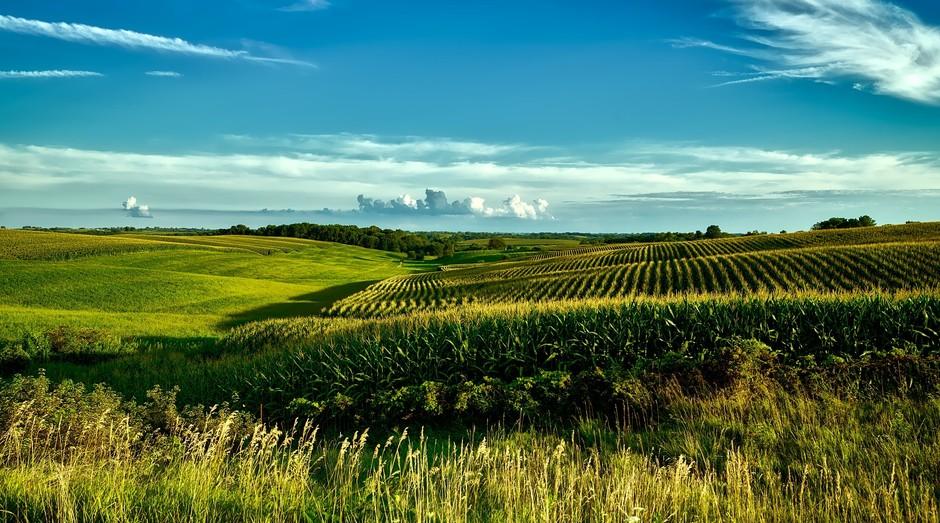 campo, agricultura, commodity (Foto: Reprodução/Pexels)