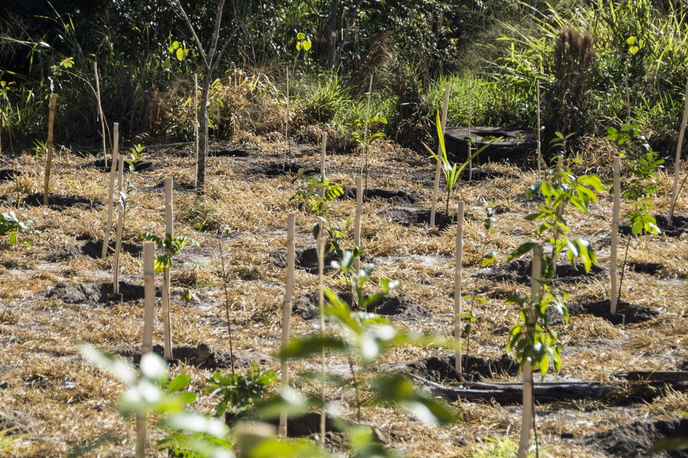 Dia da árvore terá plantio de mudas e outras atividades na terça-feira (21) e quarta-feira (22)  — Foto: Divulgação