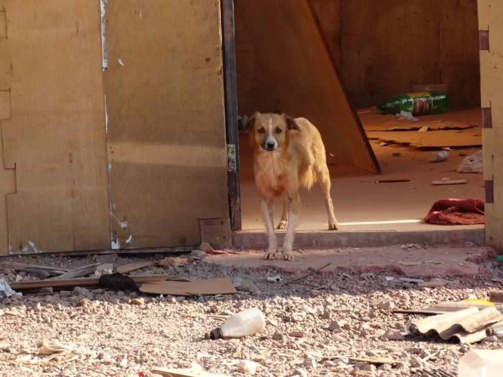Parte dos cães foram resgatados e adotados (Foto: Bem-Estar Animal/Divulgação)