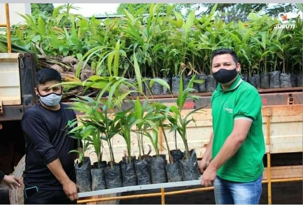 Mudas serão doadas para jurutienses na Semana do Meio Ambiente. — Foto: Prefeitura de Juruti