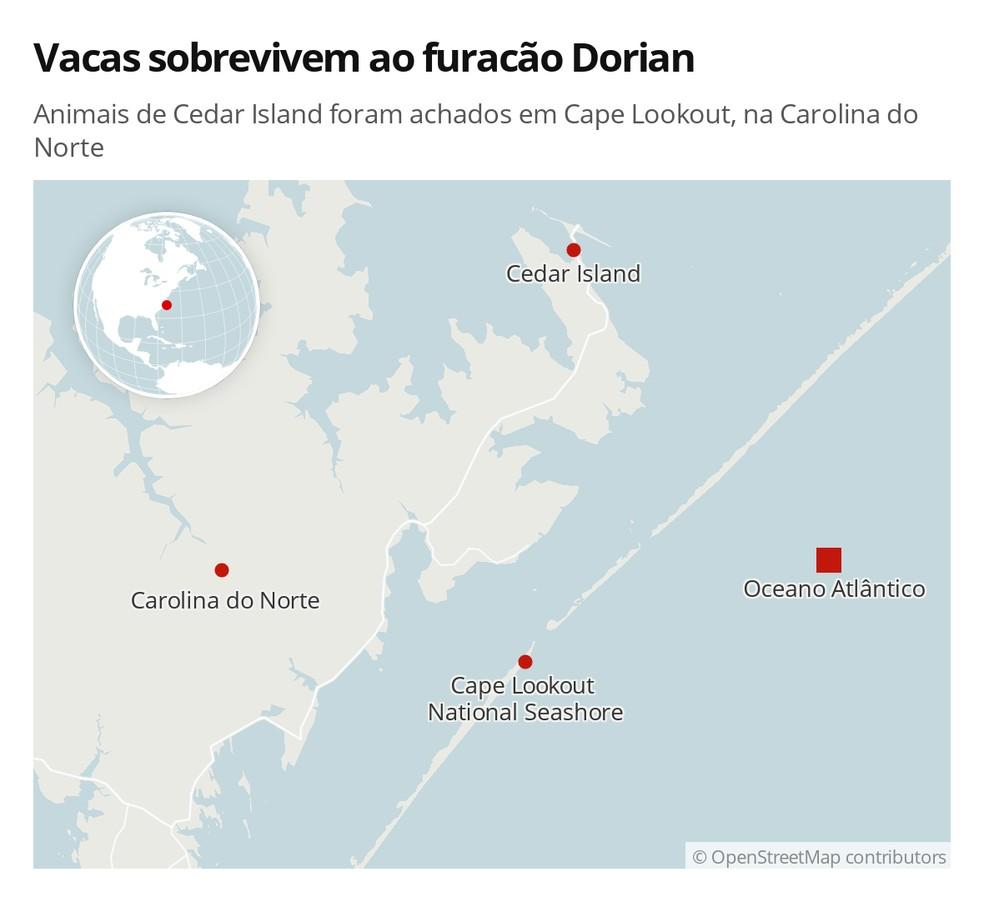 Vacas sobrevivem ao furacão Dorian — Foto: G1