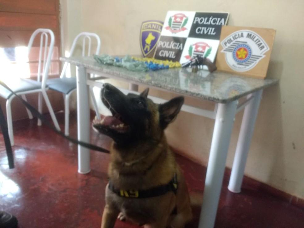 Se não fossem encontradas pelos cães, drogas ainda poderiam estar nas ruas (Foto: Polícia Militar/Cedida)