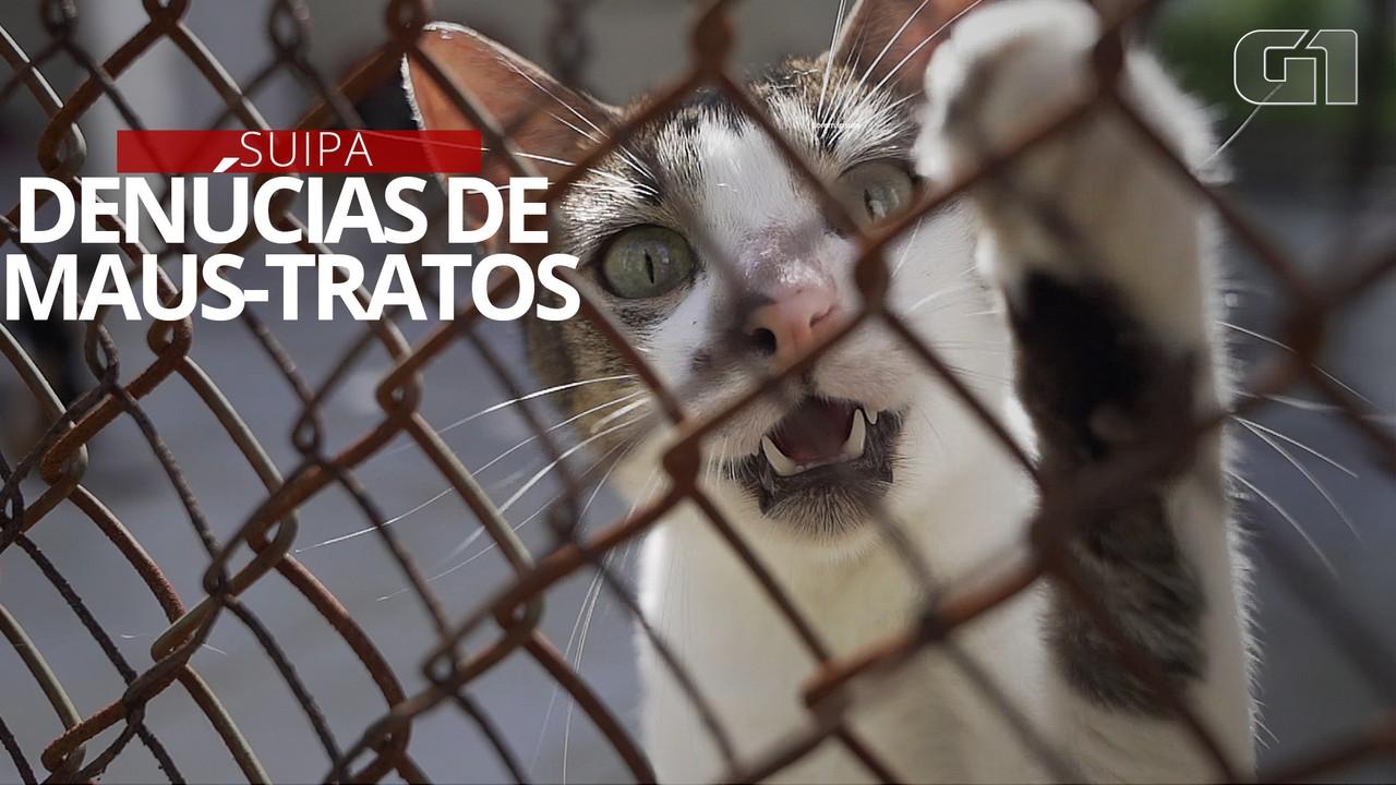 Ministério Público apura denúncias de maus-tratos a animais na Suipa