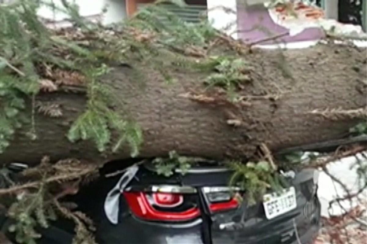 Árvore cai em cima de carro e impede trânsito em rua de Mogi das Cruzes