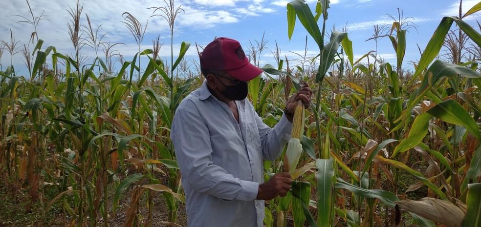 Em Mossoró, quadra chuvosa foi irregular, segundo agricultores — Foto: Hugo Andrade/Inter TV Costa Branca