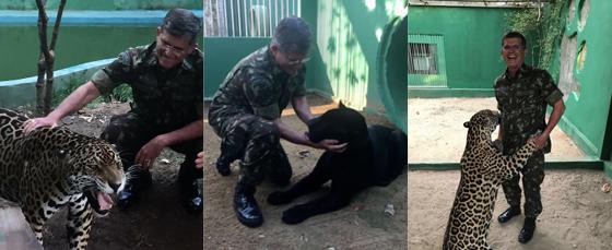 """O general Theophilo e seus """"gatinhos de estimação"""". A onça-preta se chama Aru. A pintada, Jiquitaia. Quando ele era comandante militar da Amazônia, alimentou os bichanos com ração para gato. Elas cresceram dóceis. Ele guarda como suvenir dois dentes de le (Foto: ARQUIVO PESSOAL)"""