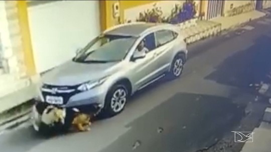 Atropelamento de cachorros repercute nas redes sociais