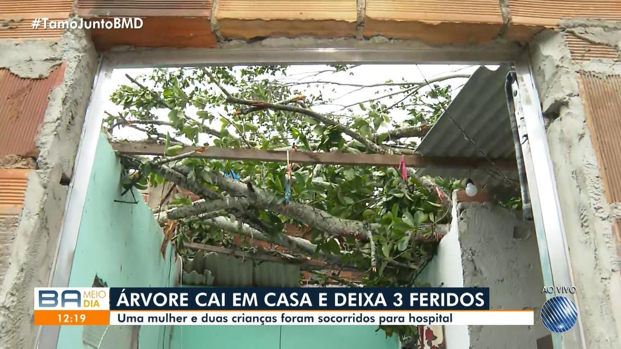 Árvore cai em casa e deixa três feridos na região metropolitana de Salvador