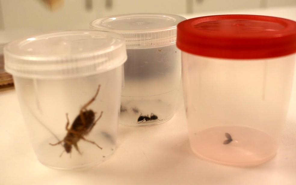 Baratas, moscas e formigas foram analisadas em estudo realizado por universidade de Campinas. (Foto: Patrícia Teixeira/G1)