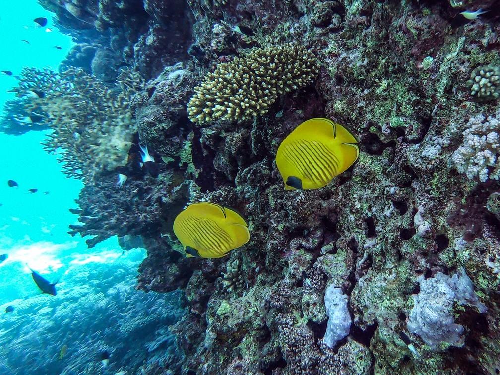 Recifes de corais de Hurghada, no Egito, estão sob ameaça  — Foto: Mohamed El-Shahed/G1
