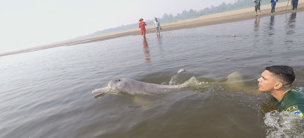 Boto é resgatado após quatro dias encalhado em braço do rio Madeira localizado em distrito de Porto Velho — Foto: Reprodução/Rede Amazônica