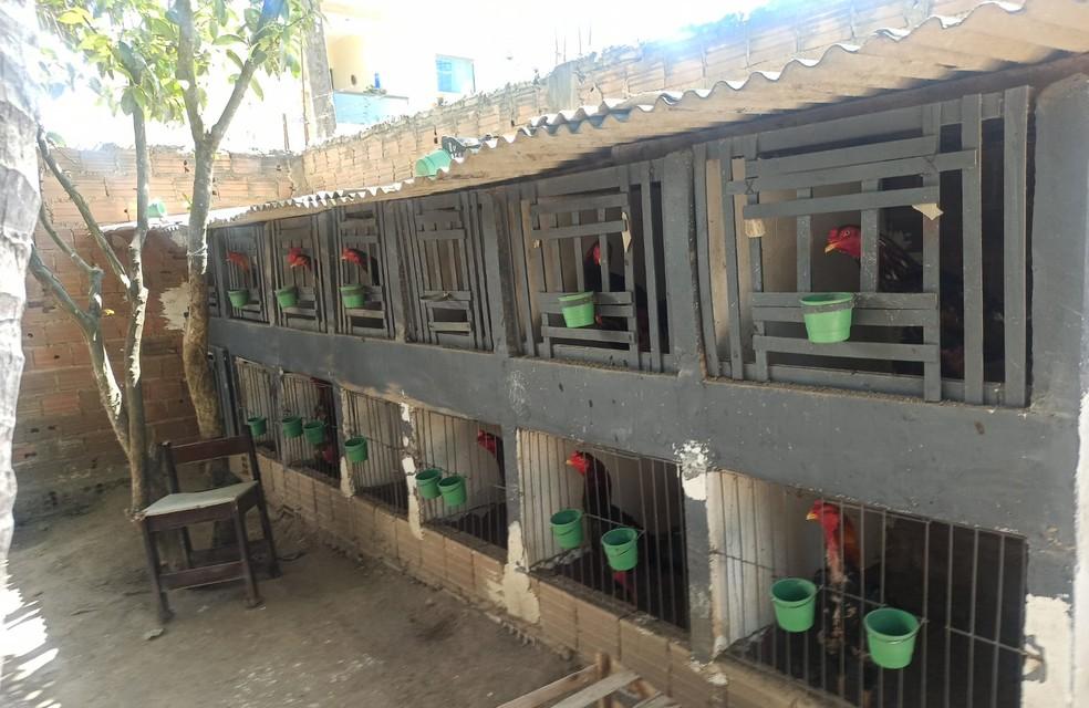 Local onde os animais foram encontrados — Foto: Polícia Militar/ Divulgação
