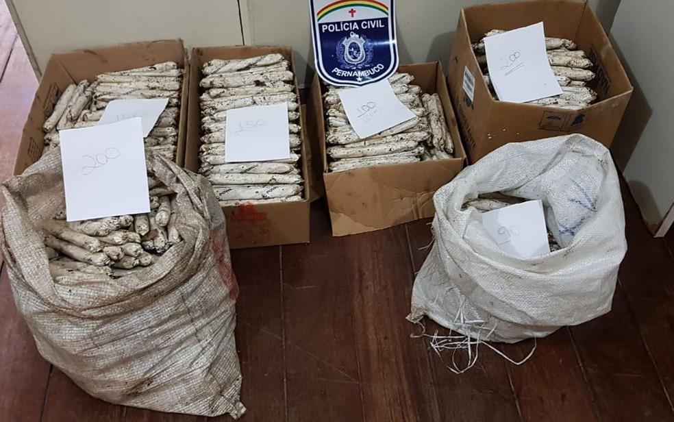 'Bananas' de dinamite foram encontradas em Moreno, no Grande Recife — Foto: Polícia Civil/Divulgação