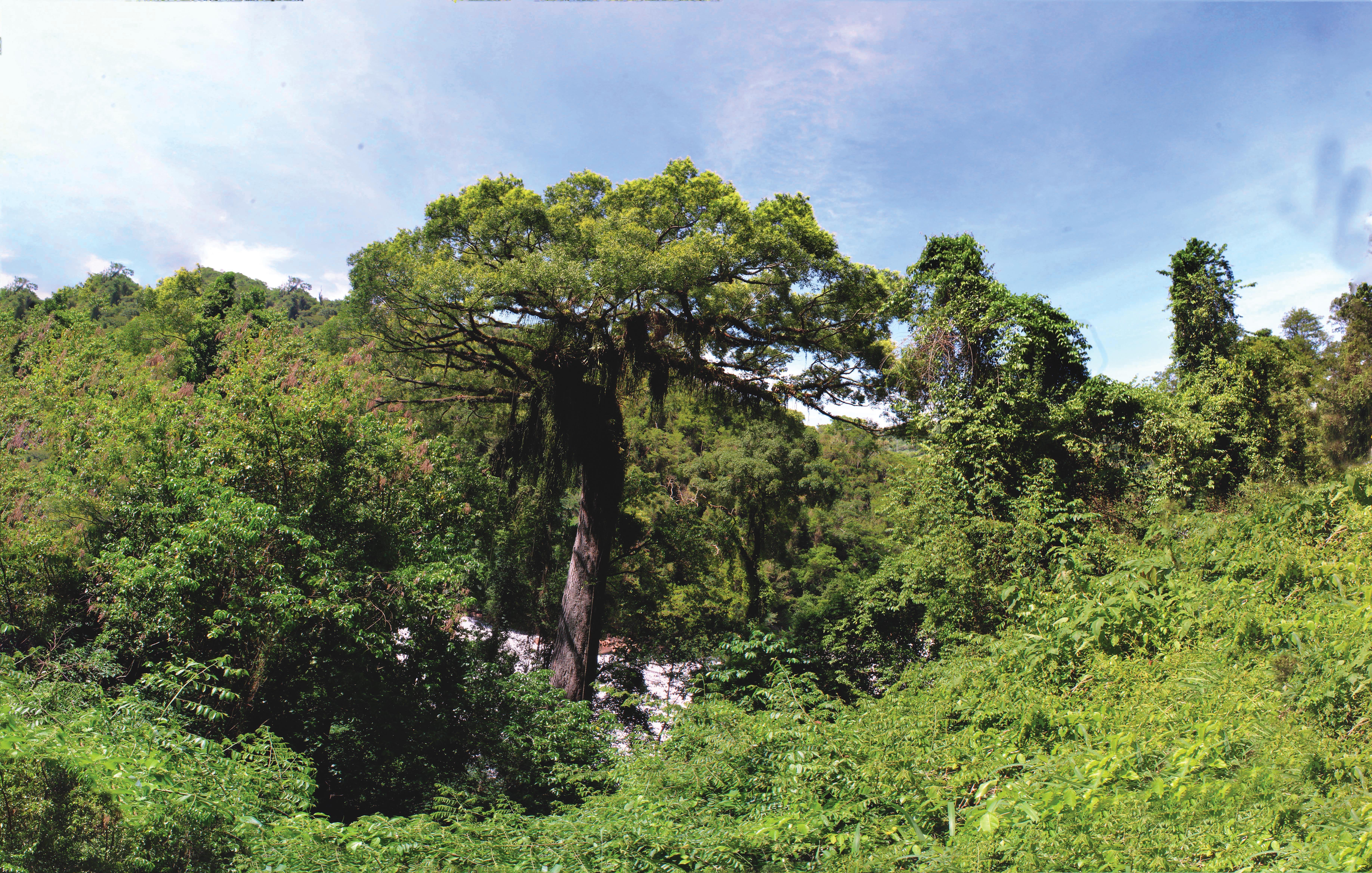 Atividades da Semana da Árvore começam nesta segunda-feira em Itu