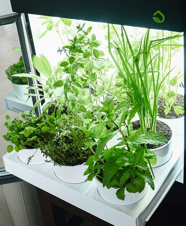 A estufa elétrica aberta: irrigação, luz e ventilação na medida certa (Foto: Divulgação)