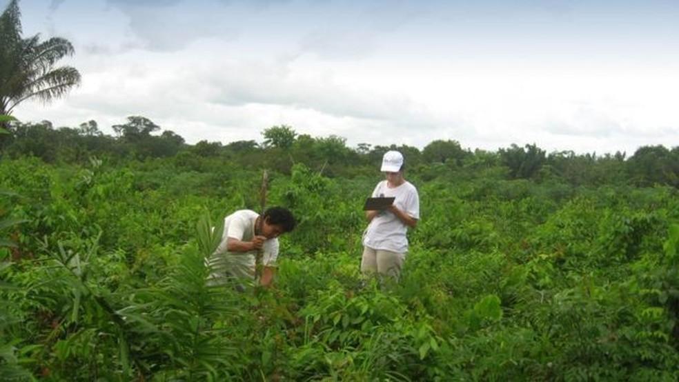 O monitoramento ecológico da restauração é feito periodicamente para garantir o sucesso. Na foto, a técnica usada foi regeneração natural assistida — Foto: UFRA-PA/Divulgação