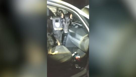 Cão da PM encontra drogas em fundo falso de carro em Ubatuba; veja vídeo