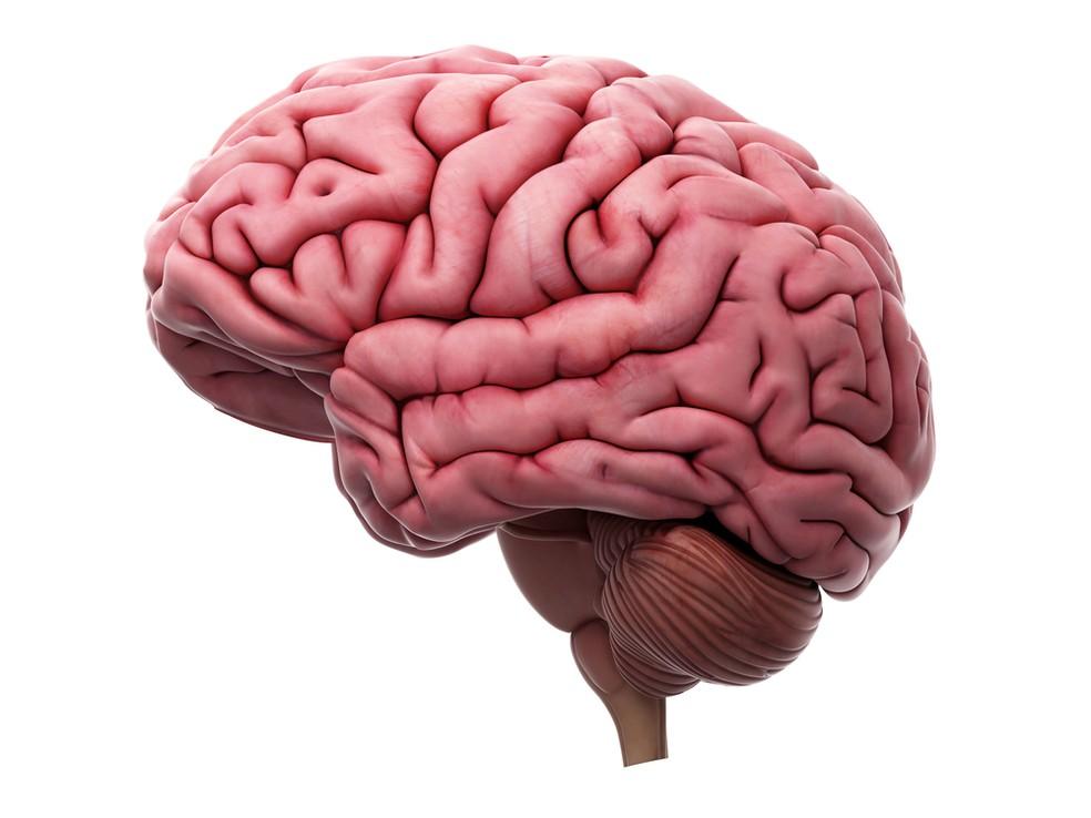 O chamado sistema de recompensa do cérebro é o circuito que processa a informação relacionada à sensação de prazer ou de satisfação — Foto: Divulgação