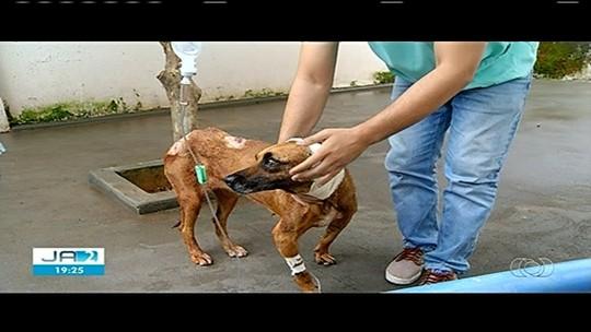 Lavrador é preso suspeito de ferir cadela com golpes de facão por se incomodar com barulho do latido, em Caldas Novas