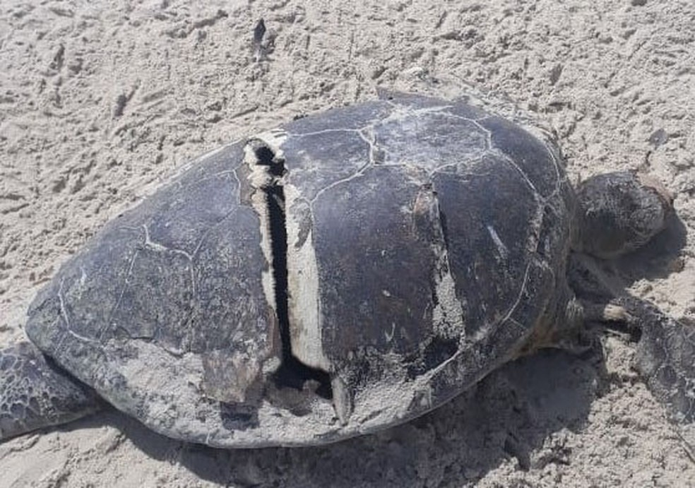 Caso ocorreu na Praia de Cururupe, em Ilhéus, cidade do sul da Bahia.  — Foto: Projeto (A)mar