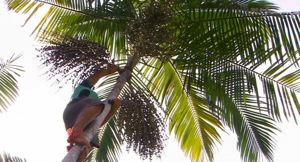 Ribeirinho coletando cacho de açaí — Foto: Reprodução/Rede Amazônica