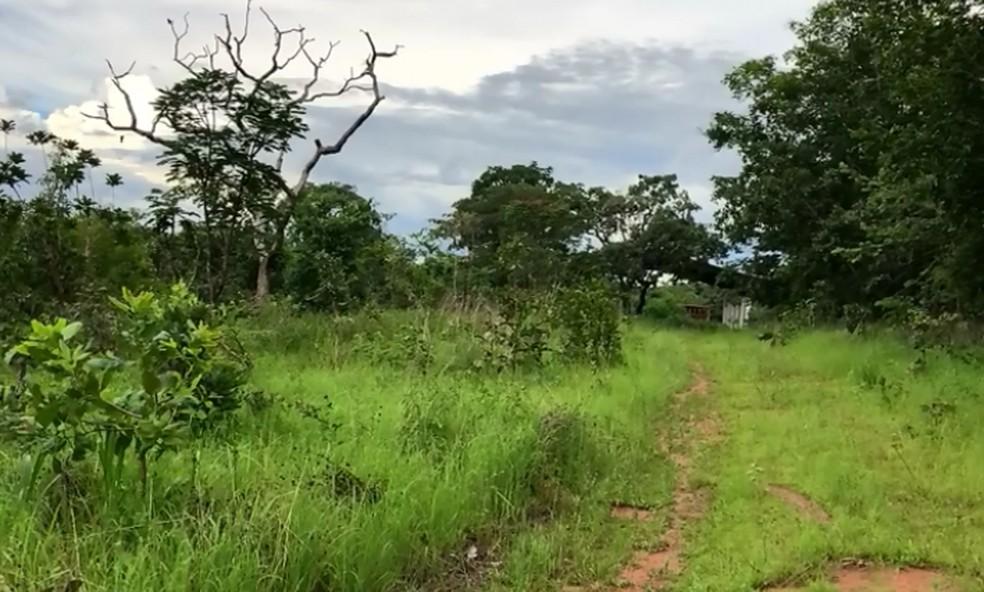Estrutura está sendo construída para receber as fêmeas africanas em Chapada dos Guimarães — Foto: Reprodução/ Facebook