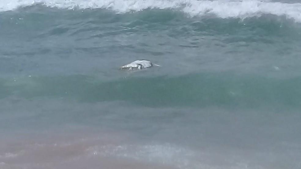 Tartaruga marinha foi encontrada morta na praia da Boca do Rio — Foto: Cid Vaz/TV Bahia