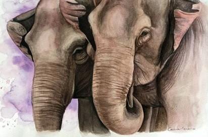 Santuário de MT leiloa obras de arte para arrecadar fundos e comemorar o 'Dia Mundial do Elefante'