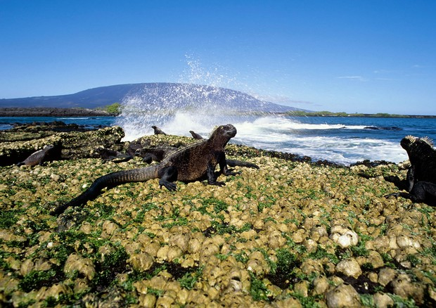 Ilhas Galápagos (Foto: Getty Images)