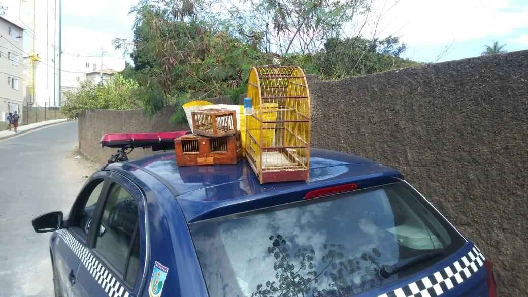 Homem é preso suspeito de capturar pássaros silvestres na Grande BH