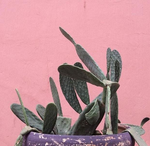plantsonpink-instagram (Foto: Reprodução/ Instagram)