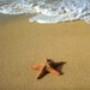 Proteção de Tela: Starfish on Beach