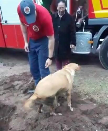 Cachorro é resgatado após ficar preso em tubulação no Litoral Norte de SC - Notícias - Plantão Diário