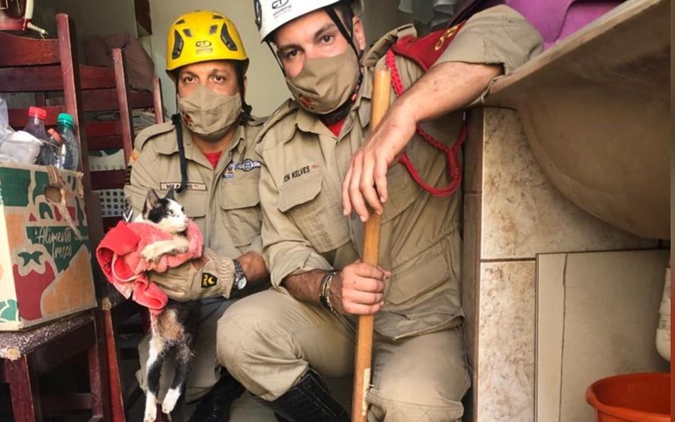 Bombeiros resgatam gato paraplégico que ficou preso em cano de esgoto em Goiânia — Foto: Reprodução/Bombeiros