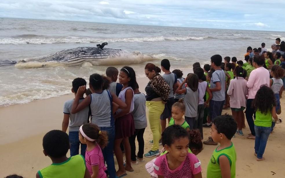 Animal está encalhado na praia de Alcobaça, sul da Bahia (Foto: Renato Sérgio/ Site Prado Notícia)