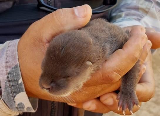 Filhote de lontra é resgatado pela PM Ambiental às margens de rio no DF; veja vídeo - Notícias - Plantão Diário