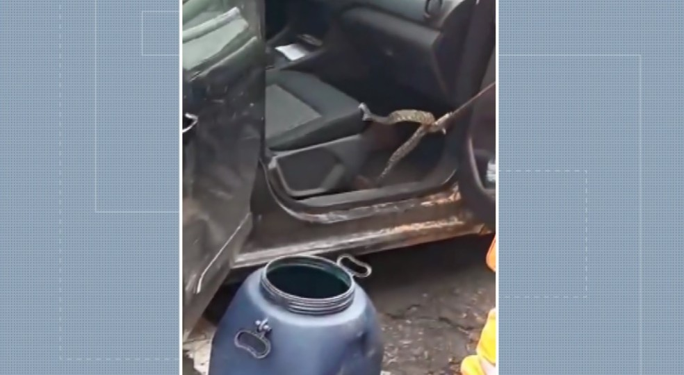 Cobra abocanhou banco do carro antes de ser capturada pelo Corpo de Bombeiros em Guaxupé (MG) — Foto: Divulgação/Corpo de Bombeiros