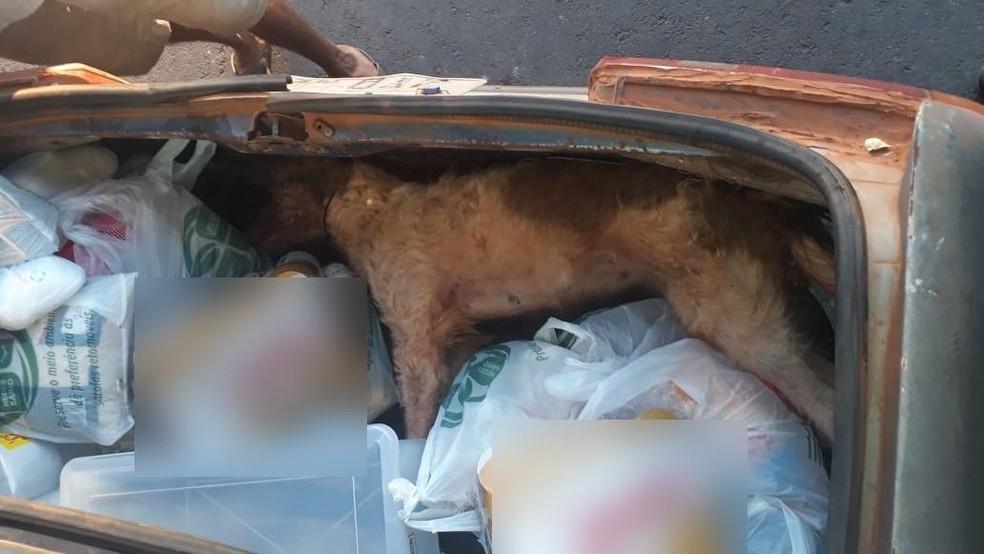 Cachorro foi encontrado morto no porta-malas do carro — Foto: Guarda Municipal/Divulgação
