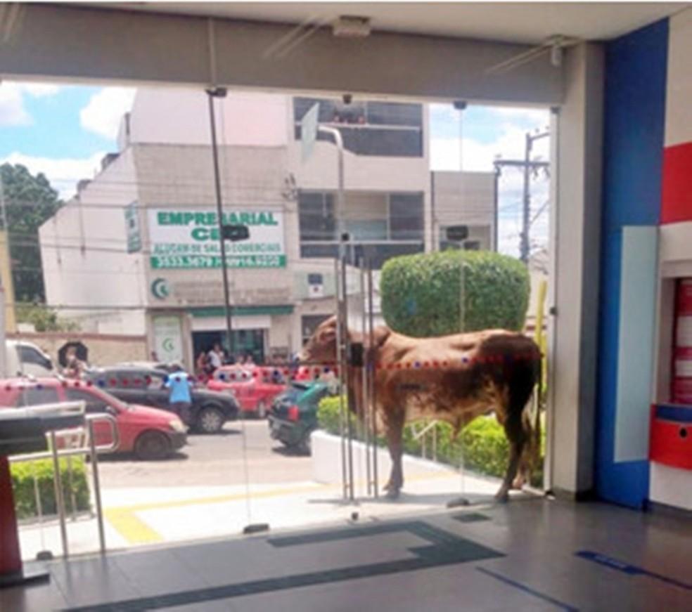 Boi ficou em frente à agência por cerca de 40 minutos — Foto: Pernambuco Notícias/Divulgação