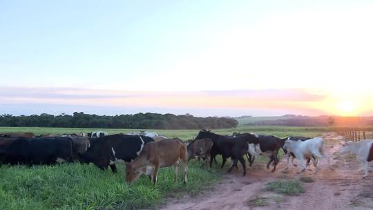 Sistema ILPF aumenta produtividade da soja e recupera áreas degradadas no Paraná