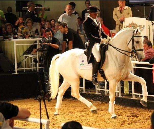 cavalo-leilão (Foto: Divulgação)